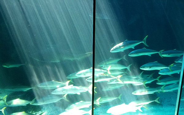 two_oceans4_fish_art_embed