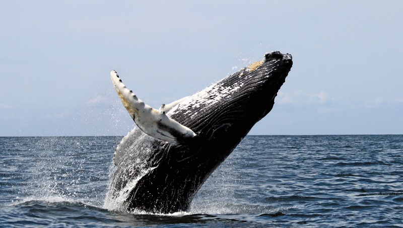 Whales, marine wildlife, tourism, nature