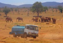 Patrick Mwalua, Kenya, Tsavo West National Park, conservation, water trucks, drought