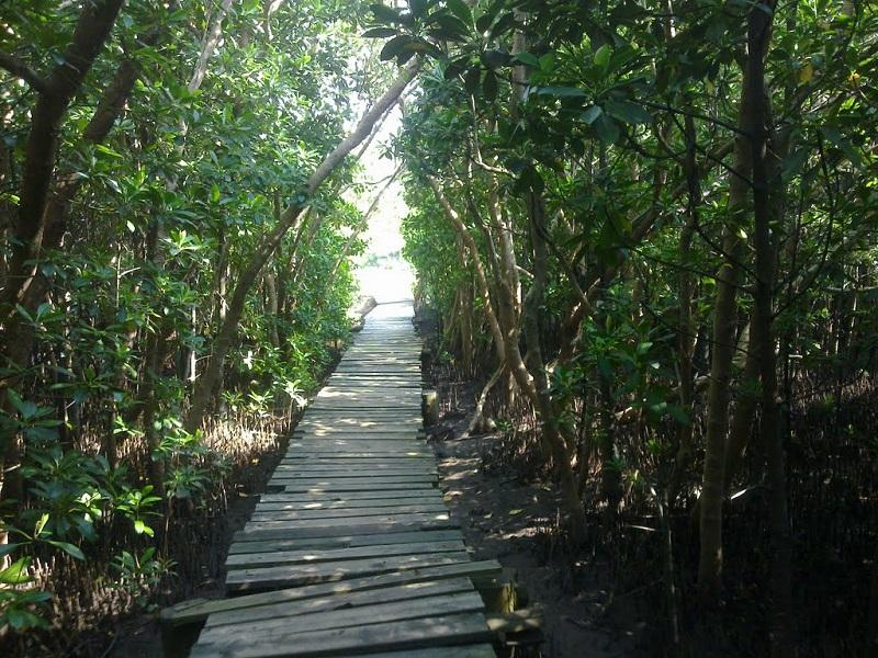 800Durban-Beachwood-Mangrove-Nature-Reserve