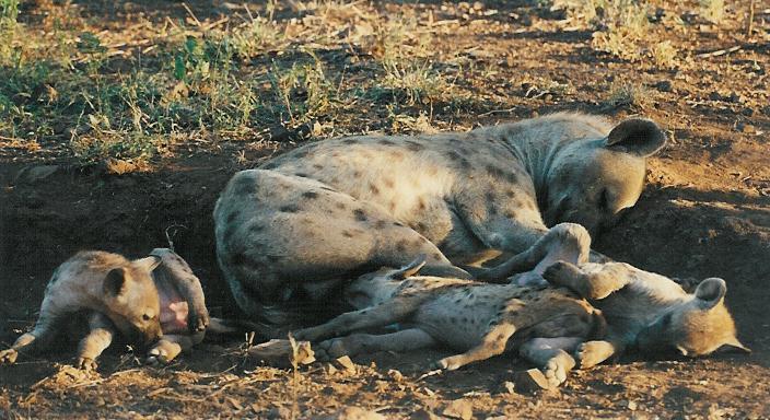 Jo-Anne-Hyena-fam