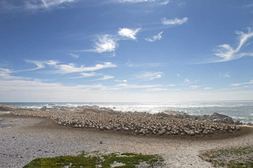 Bird Island Nature Reserve, Lambert's Bay, Western Cape.
