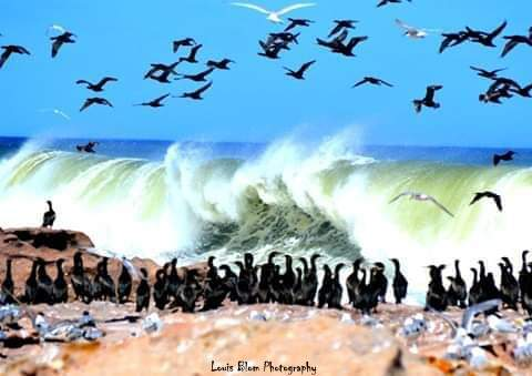 louis-birds-and-waves