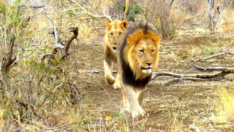 sara-LionsaIMG_0660a-001