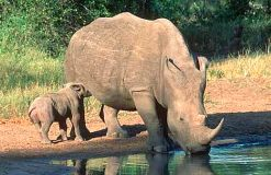 South Africa is to intensify its anti- poaching strategy