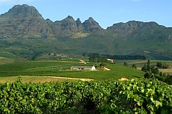 South African red and white wines have taken top honours at the prestigious Decanter 2009 Wine Awards