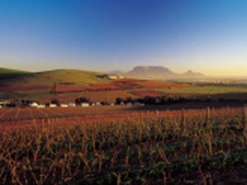 Many of South Africa's most successful wines are grown and produced in the Durbanville valley.