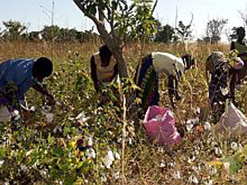 DBSA has provided a critical loan to  Zimbabwe's emerging cotton farmers.