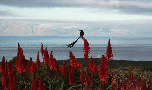 The beauty of Cape Point captured by Cathy Withers.