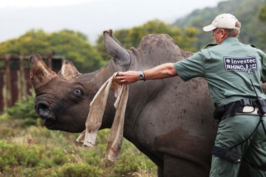 Dr Will Fowlds doing what he does best.