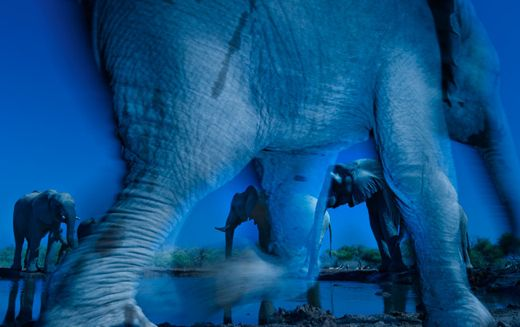 """Winning image: Greg du Toit's 'Essence of Elephants' won him the title of Wildlife Photographer of the Year. Photo: <a href=""""http://www.nhm.ac.uk/"""" target=""""_blank"""">Natural History Museum</a>"""