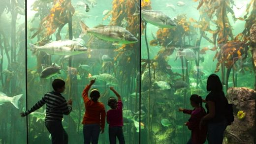 """The magical kelp forest exhibit at Cape Town's Two Oceans Aquarium. Image: <a href=""""http://www.aquarium.co.za/"""" target=""""_blank"""">Two Oceans Aquarium</a>"""