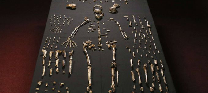 HomoNaledi article