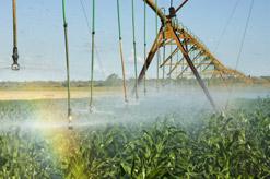 A maize field under centre-pivot irrigation near Hoedspruit, Mpumalanga. (Image: Brand South Africa)