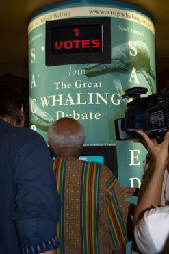whaling debate Japan and the intensifying global whaling debate by david mcneill and ian mather [the long-simmering global whaling debate is entering a new phase as japan is poised on eliminating international strictures on whaling and green peace intensifies its southern oceans campaign to halt japanese and other whalingjapan focus presents two articles on whaling, one focusing on the view from japan, the.