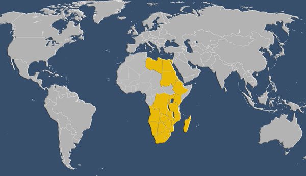 African Free Trade Agreement