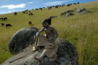 Cattle graze in the fields below the Nelson Mandela Museum outside Mandela's home village of Qunu in the Eastern Cape. They are watched by Vuyani Sidubule, dressed to show he is currently undergoing his manhood initiation.
