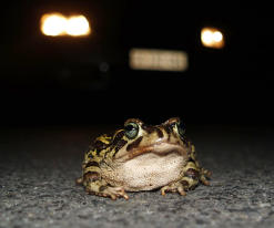 toad1-text
